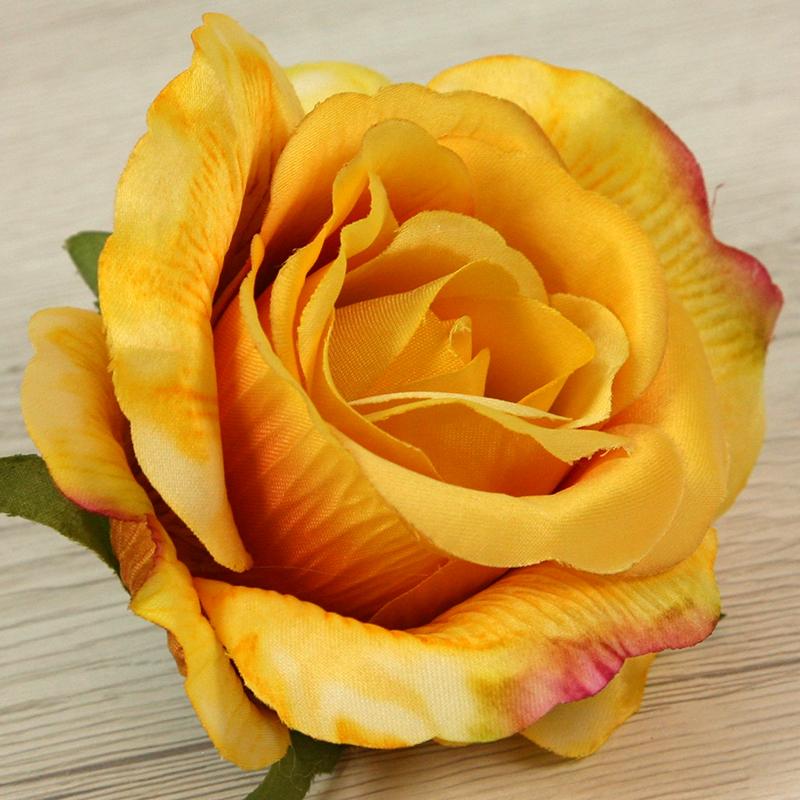 Ruža vencová  JX19095-65