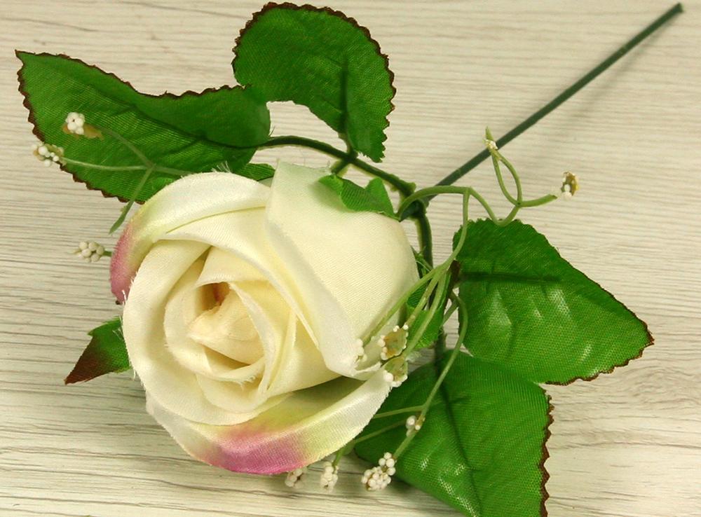 Ruža vencová puk  JX1915-3