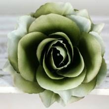 Ruža vencová rozvitá  JX1636-14