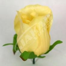 Ruža vencová puk  JX1662-5