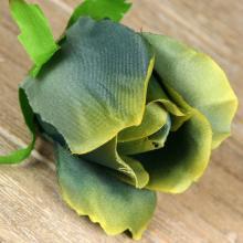 Ruža vencová  JX1910-15