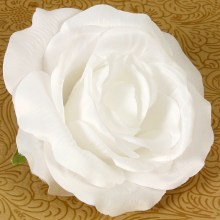 Ruža vencová  JX19125-1