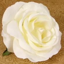 Ruža vencová  JX19125-2