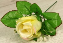 Ruža vencová puk  JX1915-4