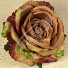 Ruža vencová JX1921-34