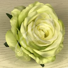Ruža vencová JX1921-6