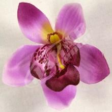 Orchidea vencová  SCC12-10L