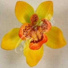 Orchidea vencová  SCC12-10