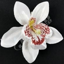 Orchidea vencová  SCC12-11