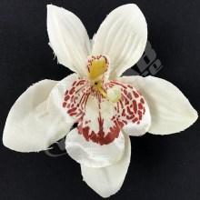 Orchidea vencová  SCC12-12