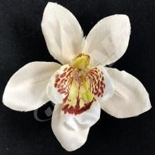 Orchidea vencová  SCC12-2