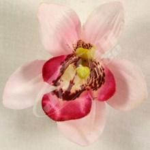 Orchidea vencová  SCC12-4