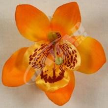 Orchidea vencová  SCC12-5