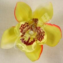 Orchidea vencová  SCC12-6