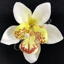 Orchidea vencová  SCC12-7