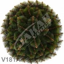 Veniec borovicový dvojfarebný V181A