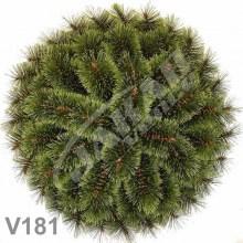 Veniec borovicový klasický V181