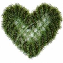 Srdce borovicové V355