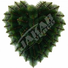 Srdce borovicové V499A