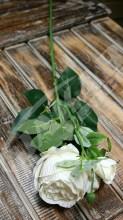 Vetva ruža  YX1015